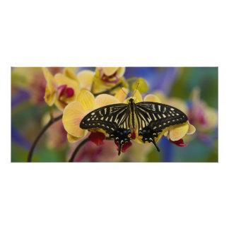 Sammamish, Washington Tropical Butterfly 44 Art Photo