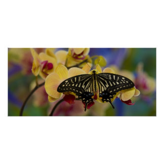 Sammamish, Washington Tropical Butterfly 44 Poster