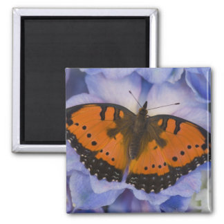 Sammamish Washington Tropical Butterfly 4 2 Inch Square Magnet