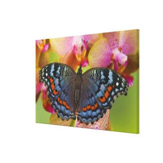 Sammamish Washington Tropical Butterfly 4 Canvas Print