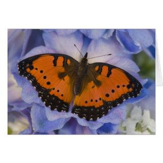 Sammamish Washington Tropical Butterfly 4 Card