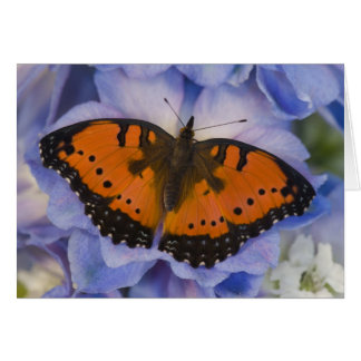 Sammamish Washington Tropical Butterfly 4 Greeting Card