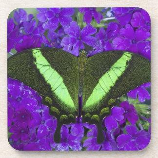 Sammamish, Washington Tropical Butterfly 4 Coaster