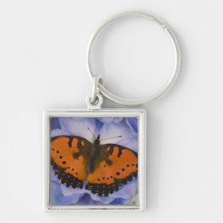 Sammamish Washington Tropical Butterfly 4 Keychain