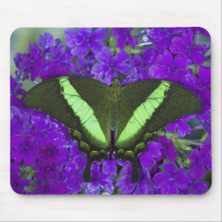Sammamish, Washington Tropical Butterfly 4 Mouse Pads