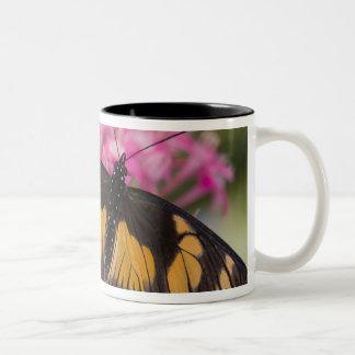 Sammamish, Washington Tropical Butterfly 4 Two-Tone Coffee Mug