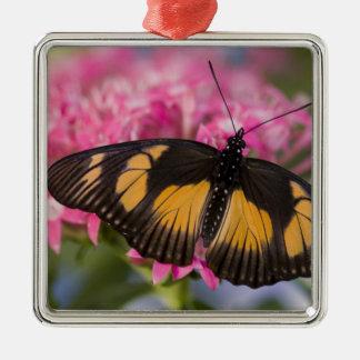 Sammamish, Washington Tropical Butterfly 4 Christmas Tree Ornament