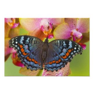 Sammamish Washington Tropical Butterfly 4 Photo Print