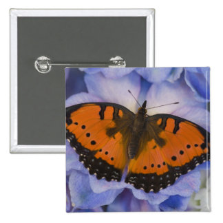 Sammamish Washington Tropical Butterfly 4 Pinback Button