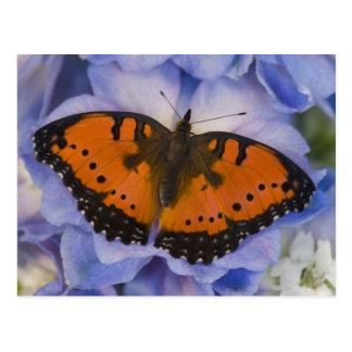 Sammamish Washington Tropical Butterfly 4 Postcard
