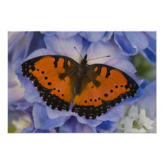 Sammamish Washington Tropical Butterfly 4 Poster