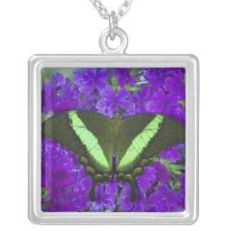 Sammamish, Washington Tropical Butterfly 4 Silver Plated Necklace