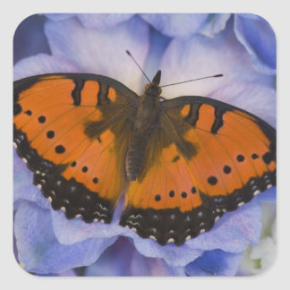 Sammamish Washington Tropical Butterfly 4 Square Sticker