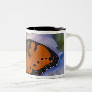 Sammamish Washington Tropical Butterfly 4 Two-Tone Coffee Mug