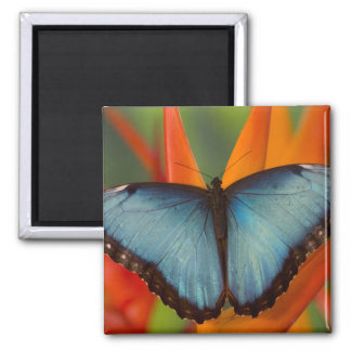 Sammamish Washington Tropical Butterfly 5 2 Inch Square Magnet