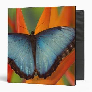 Sammamish Washington Tropical Butterfly 5 3 Ring Binder