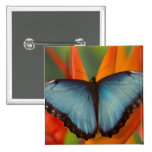 Sammamish Washington Tropical Butterfly 5 Buttons