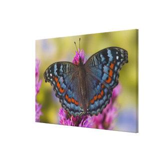 Sammamish Washington Tropical Butterfly 5 Canvas Print