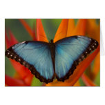 Sammamish Washington Tropical Butterfly 5 Greeting Card
