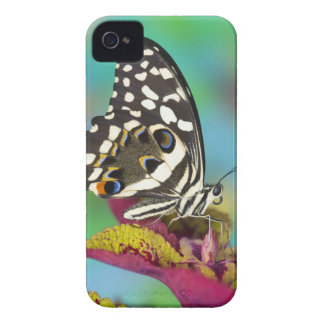 Sammamish, Washington Tropical Butterfly 5 iPhone 4 Case