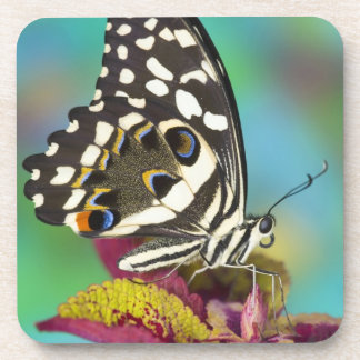 Sammamish, Washington Tropical Butterfly 5 Drink Coaster