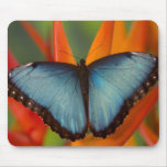 Sammamish Washington Tropical Butterfly 5 Mousepads