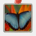 Sammamish Washington Tropical Butterfly 5 Christmas Tree Ornaments