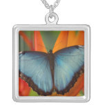 Sammamish Washington Tropical Butterfly 5 Pendant