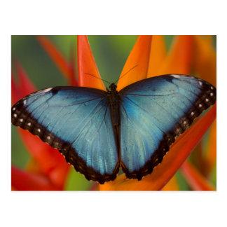 Sammamish Washington Tropical Butterfly 5 Postcard
