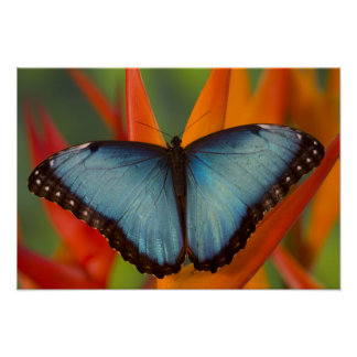 Sammamish Washington Tropical Butterfly 5 Poster