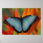 Sammamish Washington Tropical Butterfly 5 Print