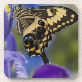 Sammamish, Washington Tropical Butterfly 6 Beverage Coaster