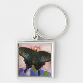 Sammamish, Washington Tropical Butterfly 6 Keychain