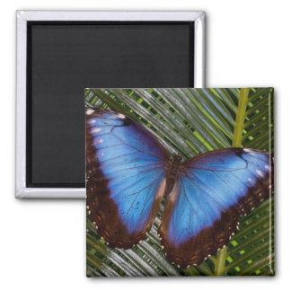Sammamish Washington Tropical Butterfly 6 Fridge Magnets