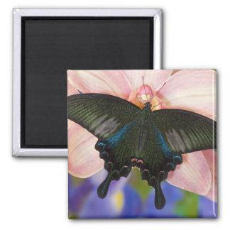 Sammamish, Washington Tropical Butterfly 6 Fridge Magnets