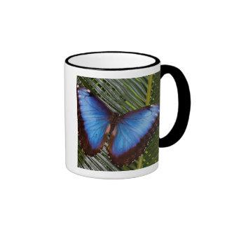 Sammamish Washington Tropical Butterfly 6 Mug