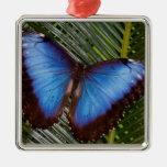Sammamish Washington Tropical Butterfly 6 Christmas Ornament
