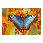 Sammamish Washington Tropical Butterfly 6 Photo