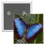 Sammamish Washington Tropical Butterfly 6 Pin