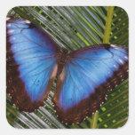 Sammamish Washington Tropical Butterfly 6 Sticker