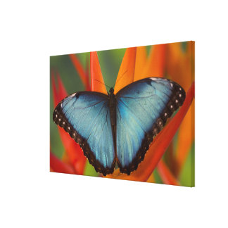Sammamish Washington Tropical Butterfly 7 Canvas Print