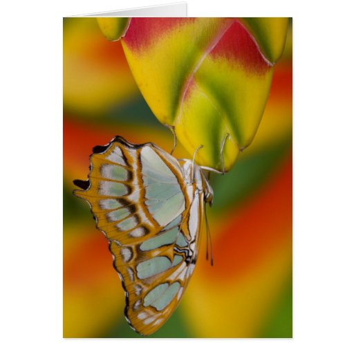Sammamish, Washington Tropical Butterfly 7 Greeting Card
