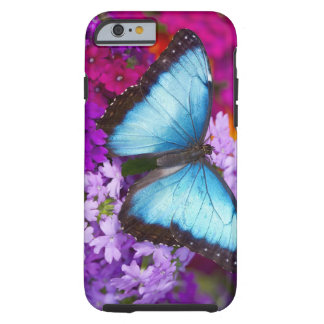 Sammamish Washington Tropical Butterfly 7 iPhone 6 Case