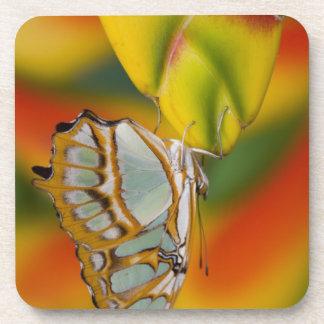 Sammamish, Washington Tropical Butterfly 7 Drink Coaster