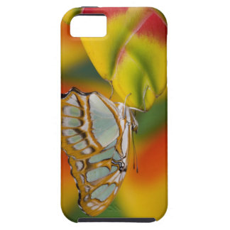 Sammamish, Washington Tropical Butterfly 7 iPhone SE/5/5s Case