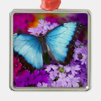 Sammamish Washington Tropical Butterfly 7 Ornaments