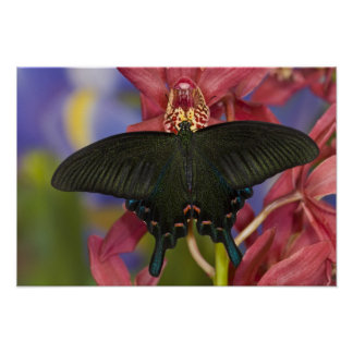 Sammamish, Washington Tropical Butterfly 7 Poster