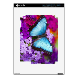 Sammamish Washington Tropical Butterfly 7 Decal For iPad 3