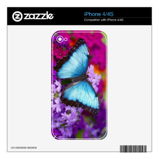 Sammamish Washington Tropical Butterfly 7 Skin For iPhone 4S