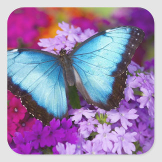 Sammamish Washington Tropical Butterfly 7 Square Sticker